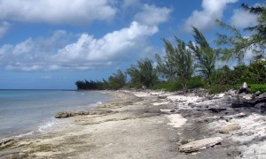 The rocky beach toward the north end of Princess Cays.