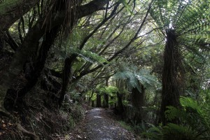 A piece of the trail on the Rakiura Track.