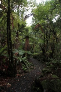 The trail continuing through the island's rainforest.