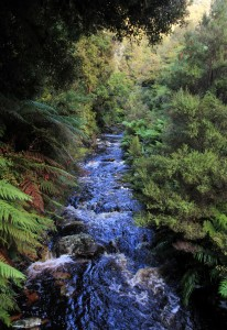 A creek rushing under the Rakiura Track.