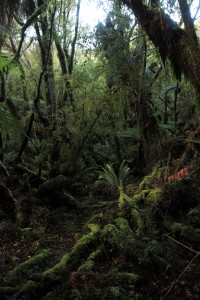 The dense, moss-covered verdure of the rainforest.