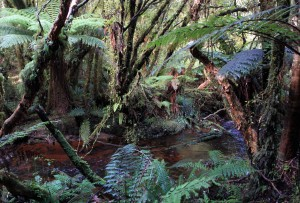 Mill Creek along the Fern Gully Track (a short track at the southern end of the Rakiura Track).