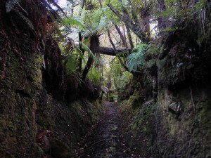 The Fern Gully Track cutting through a mound of earth.