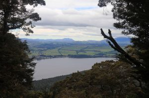 View of Te Anau and the surrounding countryside, seen through an opening in the trees.