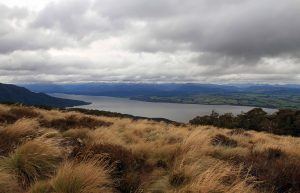View of Lake Te Anau above the treeline.
