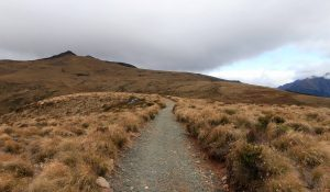 The trail passing through alpine tussock grasslands, above the treeline.