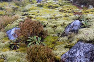 Some of the fragile plant life found in the Fiordland's alpine environment.