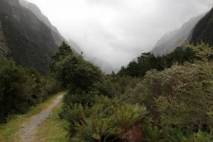 The trail nearing Mintaro Hut.