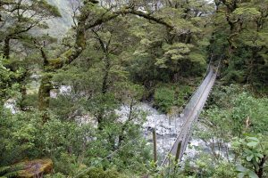Suspension bridge over a creek in the rainforest.