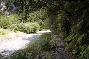 The trail along the edge of Arthur River.