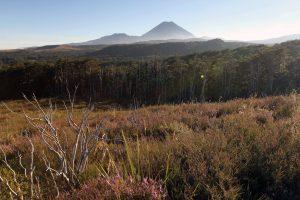 Mount Ngauruhoe seen from the start of the Tongariro Northern Circuit, near Whakapapa Village.