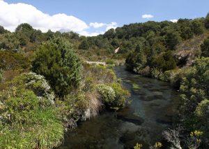 Creek near Waihohonu Hut.