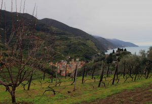 Looking down on the east part of Monterosso al Mare from a terraced vineyard.