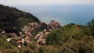 Manarola, terraced vineyards, and the Ligurian Sea.