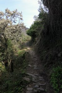 Path leading up the mountainside from Corniglia.