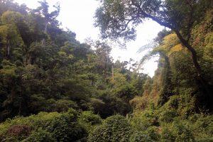 The jungle at Mele Cascades.