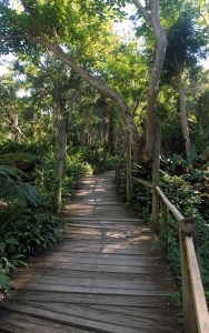 Boardwalk near the base of the mountain, inside the garden.