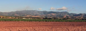 Sugar cane fields with mountains in the distance.